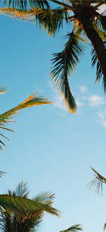 Find hd wallpapers for your desktop, mac, windows, apple, iphone or android device. Palm Tree Iphone 11 Hd Wallpapers Ilikewallpaper