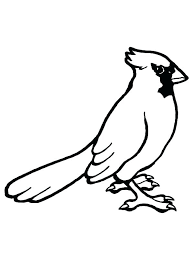 Free Birds Coloring Pages Printable Bird Big Liammarcarcandinfo