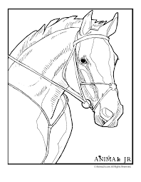 Small Picture Horse Head Coloring Pages Coloring Pages