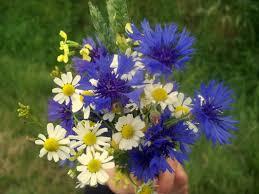 Znalezione obrazy dla zapytania sierpniowe kwiaty