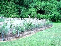fence to keep deer out of garden various how to keep deer out of vegetable garden