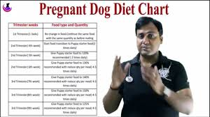 Pregnant Dog Diet Chart In Hindi