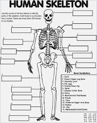 Human-body-worksheets & Systems Of The Human Body Worksheet ...