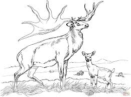 Small Picture Bull Elk Coloring Pages Download And Print For Free Within Elk