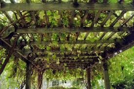 Grape Arbor - Overhead traditional-landscape