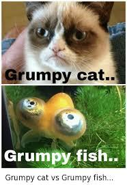 grumpy cat so beautiful. Plain Beautiful Cats Grumpy Cat And Fish Cat Fish For Cat So Beautiful
