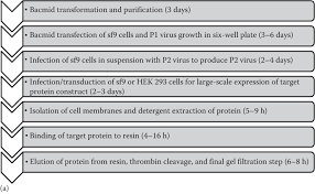 Protein Purification Chart A Flow Chart Of Trpv6 Expression Calcium Entry