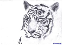 baby white tigers drawing. Interesting White Baby White Tiger Drawing  Photo10 Throughout White Tigers Drawing R