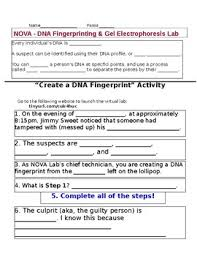 Dna Fingerprinting Lab Answers Nova Dna Fingerprinting Virtual Lab Handout By Mswalkers Stem Lab