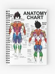 Exercise Muscle Chart Anatomy Diagram Spiral Notebook