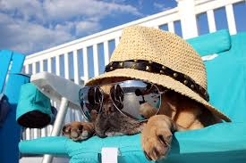Top Tips for Keeping Dogs Cool in Summer - Bow-Wow Pets