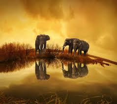 Elephant 4k wallpaper by Mr_Eddi - d9 ...