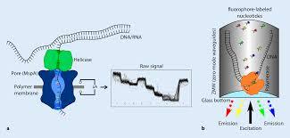 Long Read Sequencing In Human Genetics Springerlink