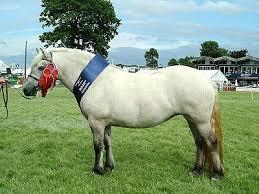 essay ponies vs atheism ponies win conservapedia essay ponies vs atheism ponies win