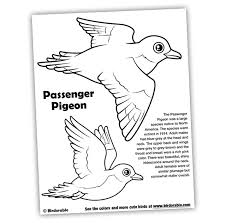 Small Picture Martha Week Project Passenger Pigeon Birdorable Blog
