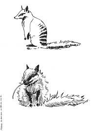 Small Picture Numbat coloring page Animals Town animals color sheet Numbat