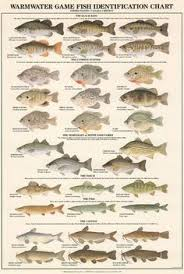 35 Best Identify That Fish Images Fish Fish Chart