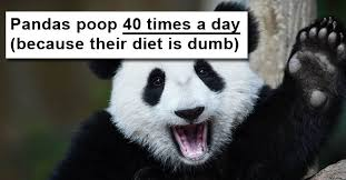 Quotes About Pandas Extraordinary 48 Reasons Pandas Are Huge Dumbass Pieces Of Shit CollegeHumor Post