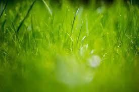 Green Grass Wallpaper Hd Download