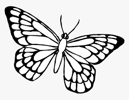 View and print full size. Butterfly Coloring Pages Hd Png Download Kindpng