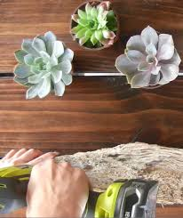 drill into a diy driftwood air plant holder