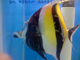 petco animals fish. Interesting Petco 3d2e4414 On Petco Animals Fish 0
