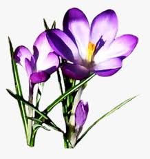free clipart spring flowers spring