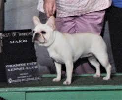 Minnesota French Bulldog Breeder AKC ...