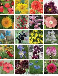 plan a flower cutting garden with cheryl parker