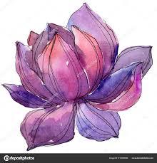 акварель лиловый лотос цветок ботанический цветочные цветок