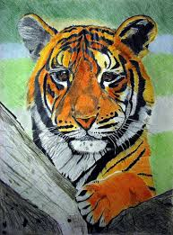color tiger drawing. Plain Tiger Tiger Drawing  Little By Melita Safran Intended Color W