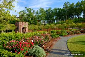 noisette roses at p allen smith s garden