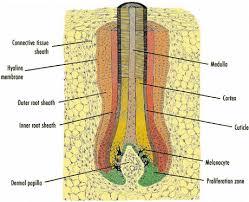 Fischer Saller Scale Chart The Color Of Human Hair Springerlink