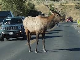 that s one ed off rutting elk jim motavalli photo