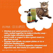 natural appetite stimulant for cats. Wonderful Appetite YUCCA FOR CATS Natural Remedy For Pain Relief Appetite Stimulant And  Digestion Cats 5 Stars 2 Reviews Support Inflamed Muscles Joints In  On Appetite Stimulant For Cats Y
