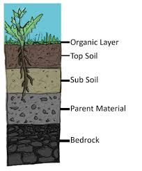 Layers of Soil   Worksheets  Layering and Nice further The Rock Cycle   Earth Science Lesson   Project   K 6 besides Rock Cycle in Earth's Crust Worksheet   Hot Resources 12 1 additionally  furthermore  furthermore 290 best Rocks   Soil ♥ Teaching Geology images on Pinterest together with Types of Rocks  Quiz   Worksheets  Rock and Earth science besides 3rd grade  4th grade Science Worksheets  Rock detective furthermore What is Soil    Soil Worksheet 2   Worksheets  Rock cycle and furthermore Soil Maze   Maze  Worksheets and Articles further . on layers of soil get the dirt worksheets rock cycle and science