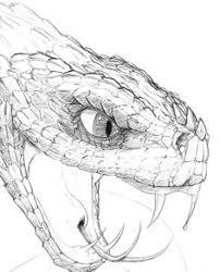 snake head drawings in pencil. Brilliant Drawings Real Drawings Of Reptiles Snake Head  To Snake Head Drawings In Pencil