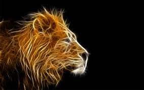 Lion wallpaper, Lion hd wallpaper ...