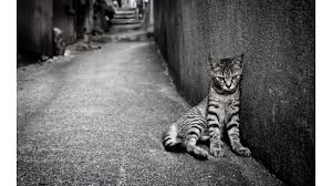 Image result for sad cat pictures