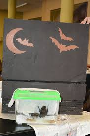 finished bat house with big brown bats photo shasta bray
