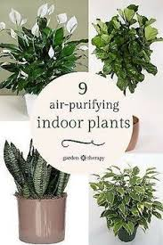plants for windowless office. plants for windowless office d