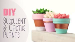 diy succulent cactus plants cute happy home decor ideas