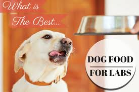 Canidae Dog Food Feeding Chart Discover The Types Of Dog Food That Is Best For Your Labs