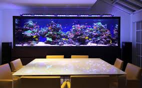 office aquarium. Fish Tank In Office. Office Aquarium
