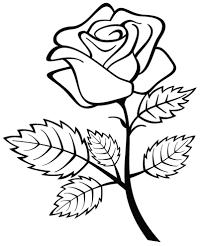 Disegni Da Colorare E Stampare Rose Timazighin Con Disegni Da