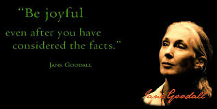 Jane Goodall Quotes Gorgeous 48 Images About Jane Goodall Quotes On Pinterest Human Being 48