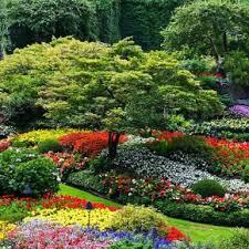garden bulbs. Garden Design Bulbs N