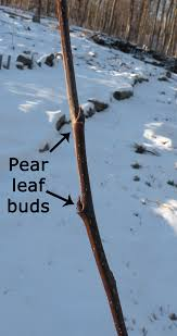 Protect Your Fruit TreesDormant Fruit Trees