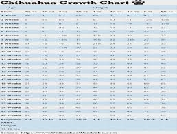 Yorkie Growth Chart In Kg Chihuahua Puppy Growth Chart Chihuahua Puppy Growth Chart