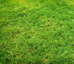 Lawn Disease What Is Dollar Spot Lawn Disease Trugreen